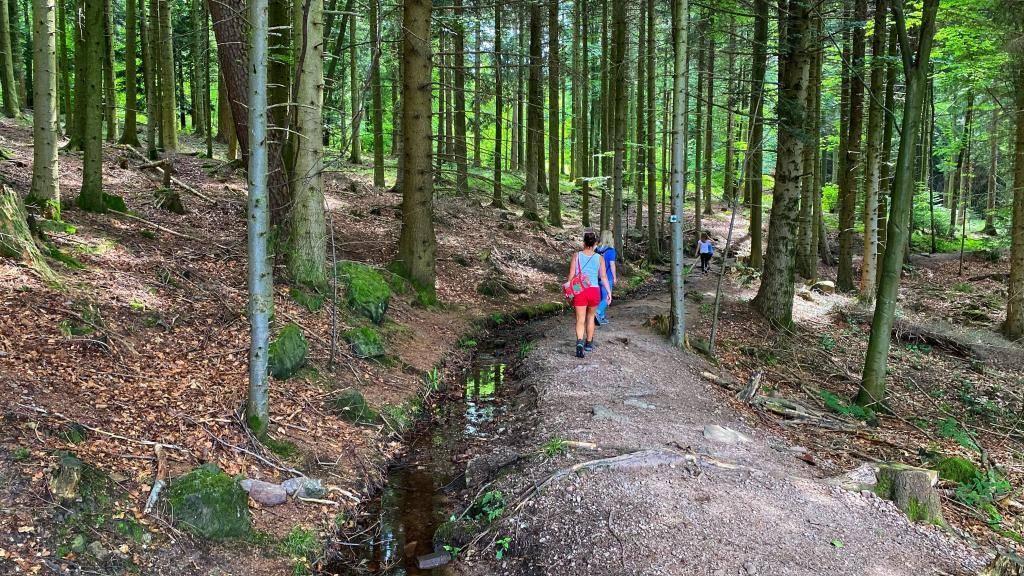 Wandern Wildkatzenpfad