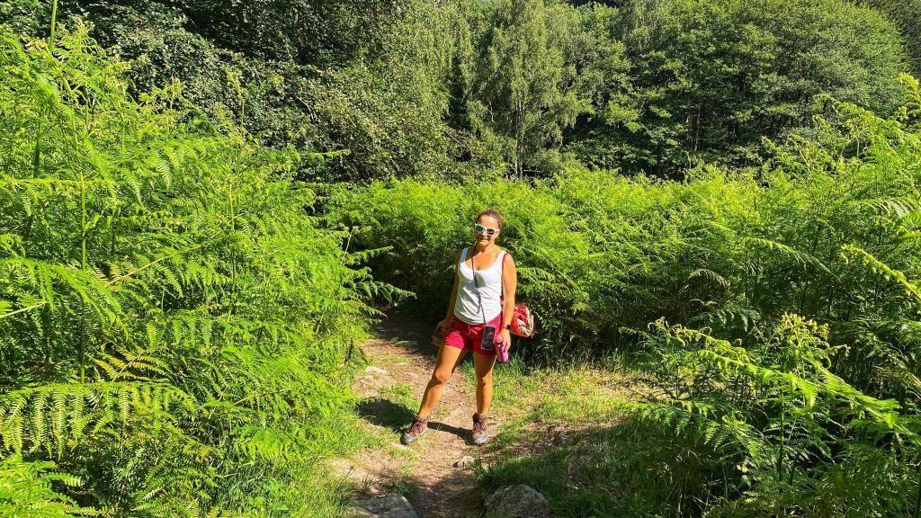 Sommer Wanderung Wildkatzenpfad