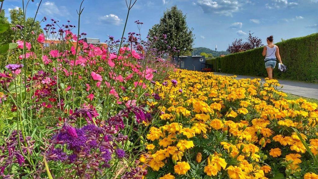 Bunte Blumen Bürgerpark Wernigerode