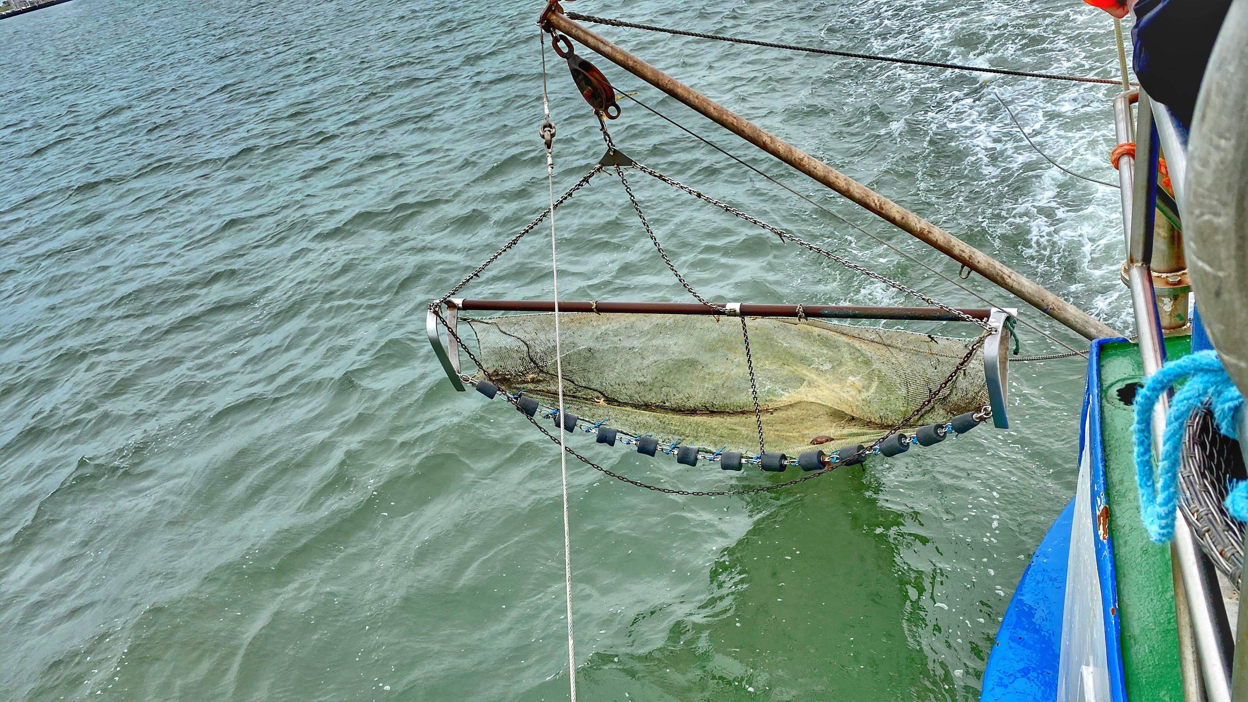Seetierfang Ausflug Kinder Nordsee