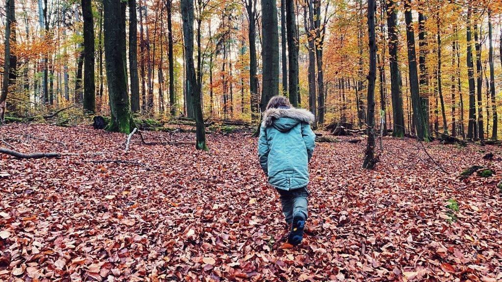Herbst Spaziergang Schwarzwald